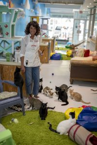 This South Beach café is gaining fans – of the feline kind, too