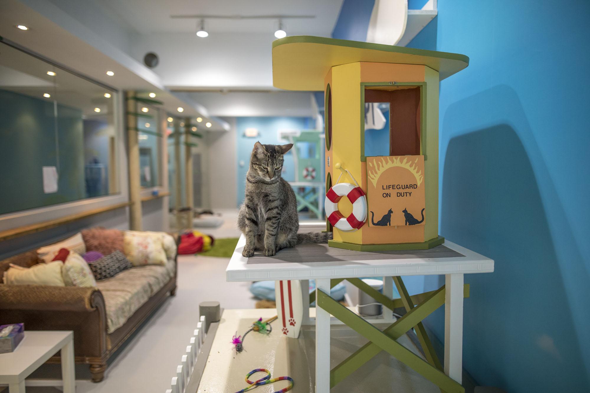 Cat Café South Beach